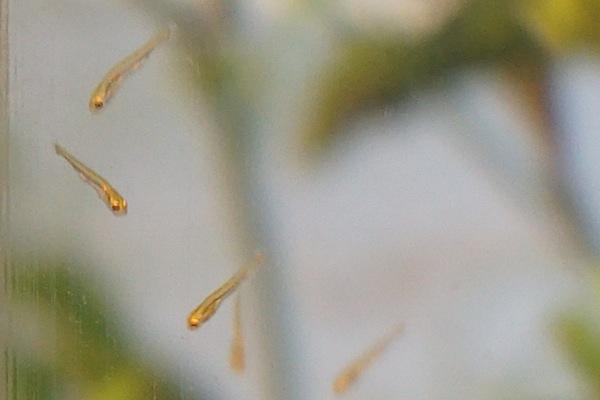 Récolte des oeufs Dsc04017