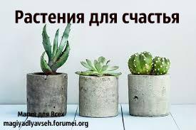 10 растений, которые принесут в Ваш дом любовь, семейную гармонию и счастье. Image110