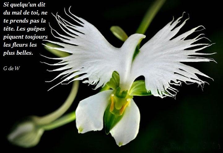 La citation du jour - Page 18 Fleur-10