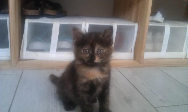 SUZIE (Ailina) Imag0630