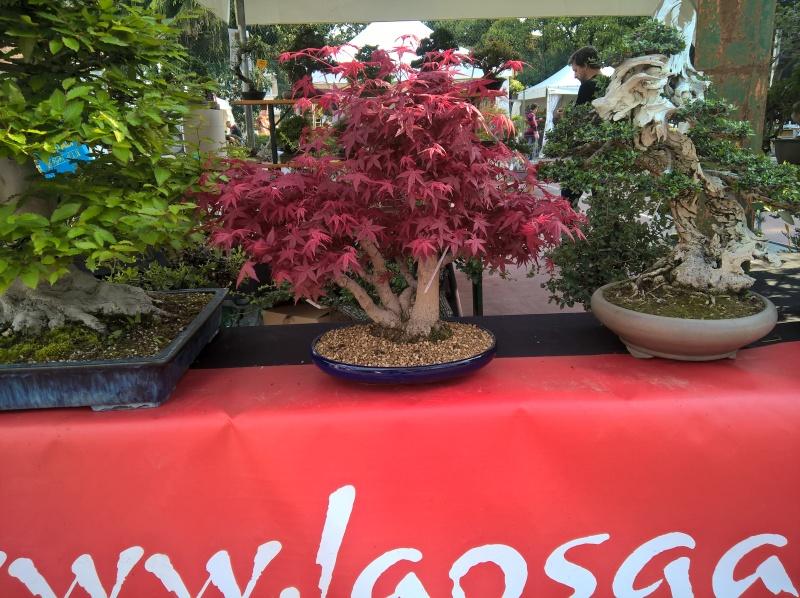 Arcobonsai 2016 Image42