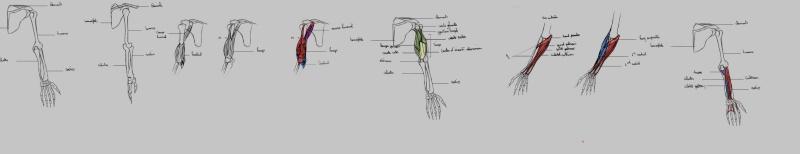 Les gribouilles d'Atna: objectif landscape et persos - Page 21 Anat13