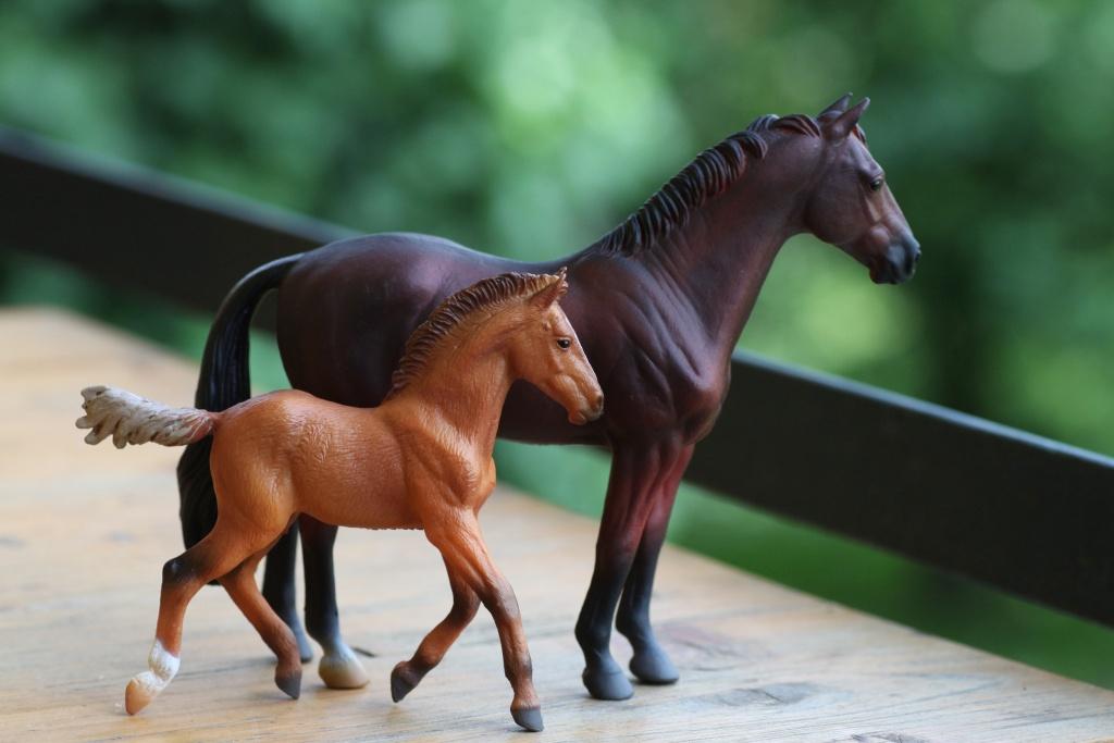 my Deborah McDermott's horses Hanove13
