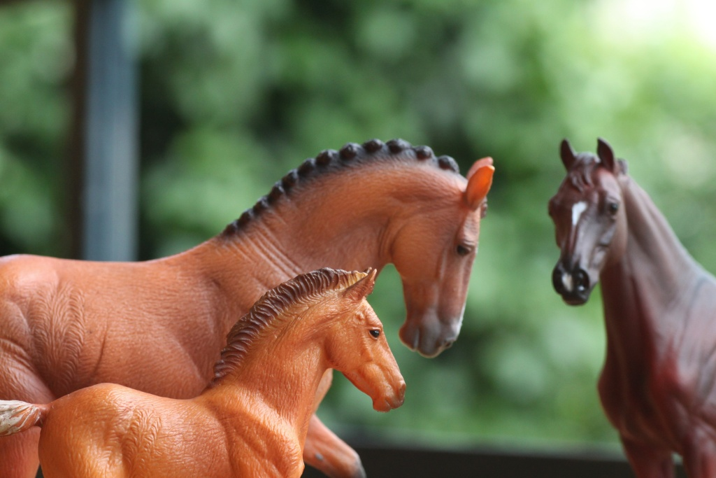 my Deborah McDermott's horses Hanove14