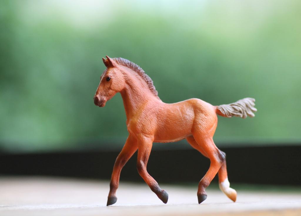 my Deborah McDermott's horses Hanove15
