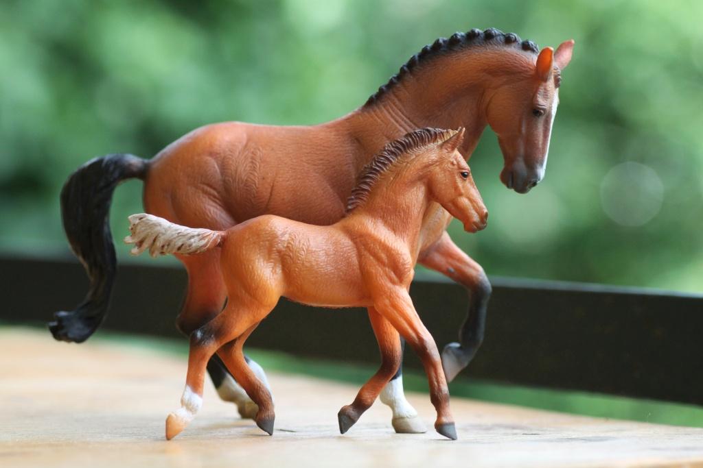 my Deborah McDermott's horses Hanove16