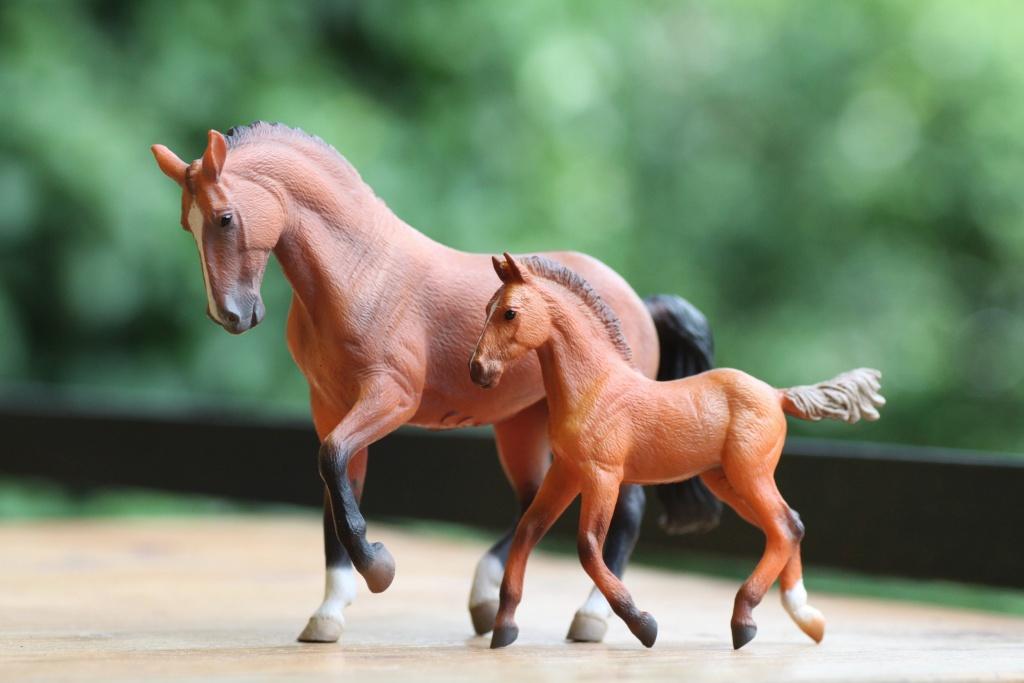 my Deborah McDermott's horses Hanove17