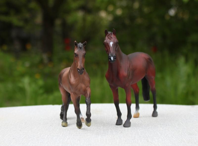 my Deborah McDermott's horses His_hi10