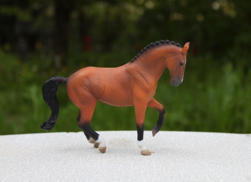 my Deborah McDermott's horses Nobles10