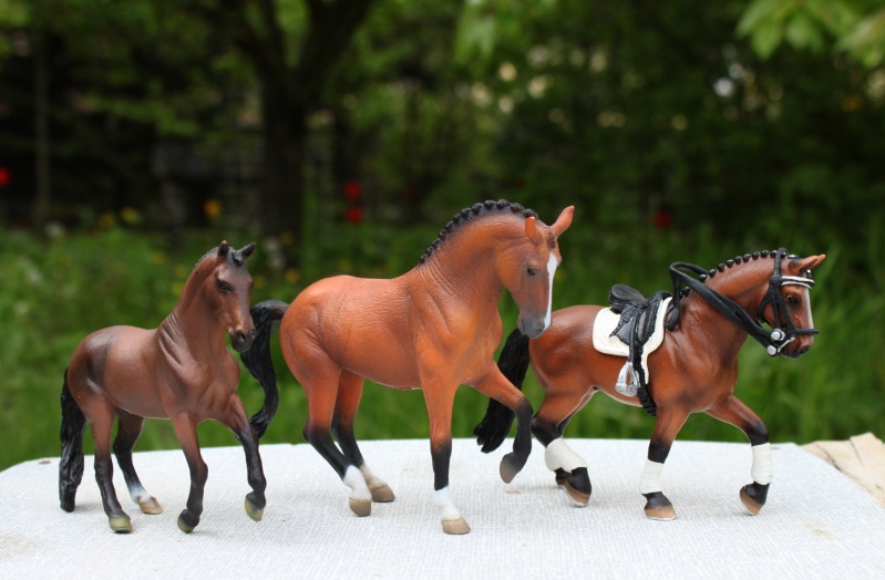my Deborah McDermott's horses Nobles11