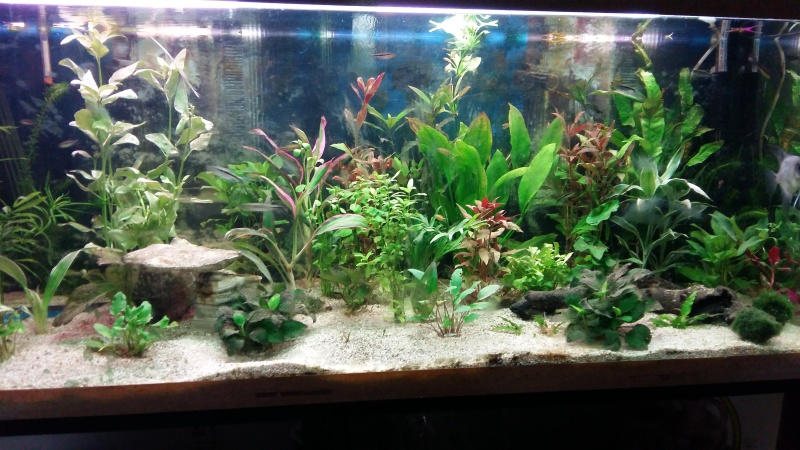 Avis sur mon aquarium 400 L 20160511