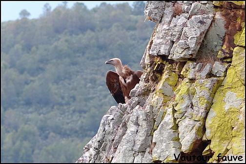 [Espagne] Parc national de Montfragüe P1040810
