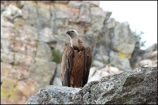 [Espagne] Parc national de Montfragüe P1050011