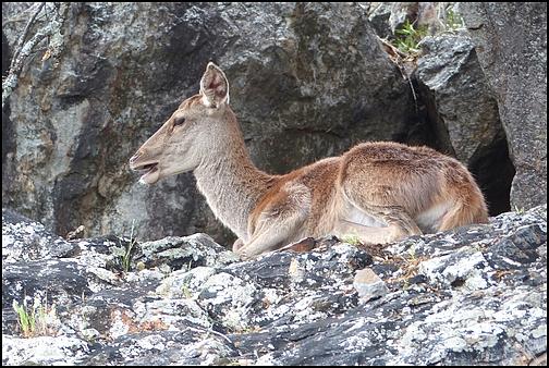 [Espagne] Parc national de Montfragüe P1050012