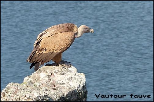 [Espagne] Parc national de Montfragüe P1050113