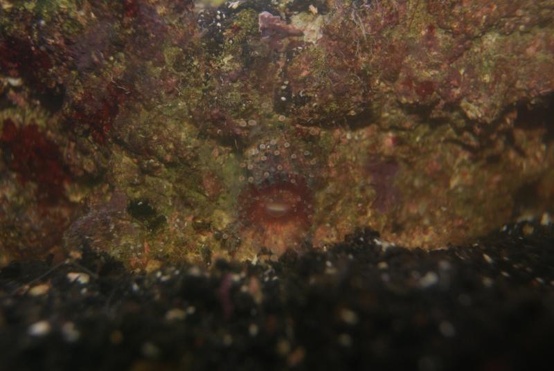 identification de cette espèce Dsc02321