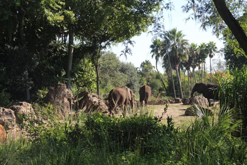 Road Trip Floridien : Le rêve de 2 soeurs - Du 4 au 21 Octobre 2015 (MAJ : 21/05/2017) - TR Terminé - Page 23 Img_4617