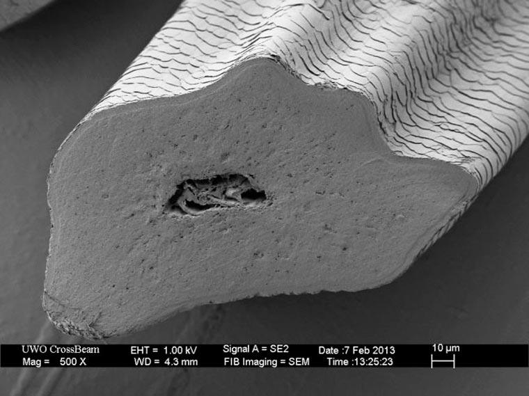 Objets du quotidien passé au microscope . Cat-wh10
