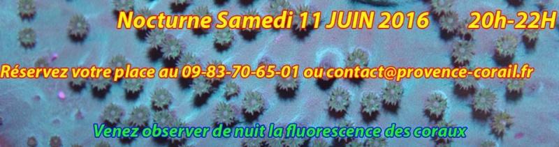 Nocturne provence corail 13221610