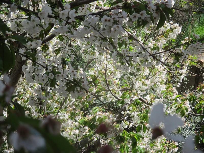 Fleurs du moment - Page 12 Img_0510