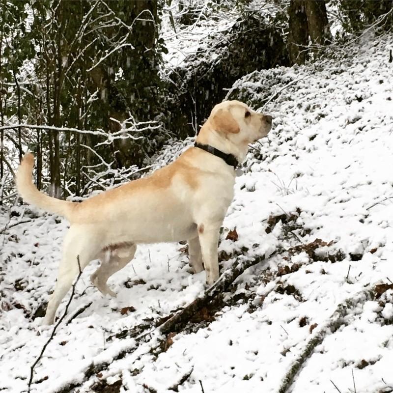 Rencontre canine du forum en région bordelaise (33) - Page 7 Img_2610
