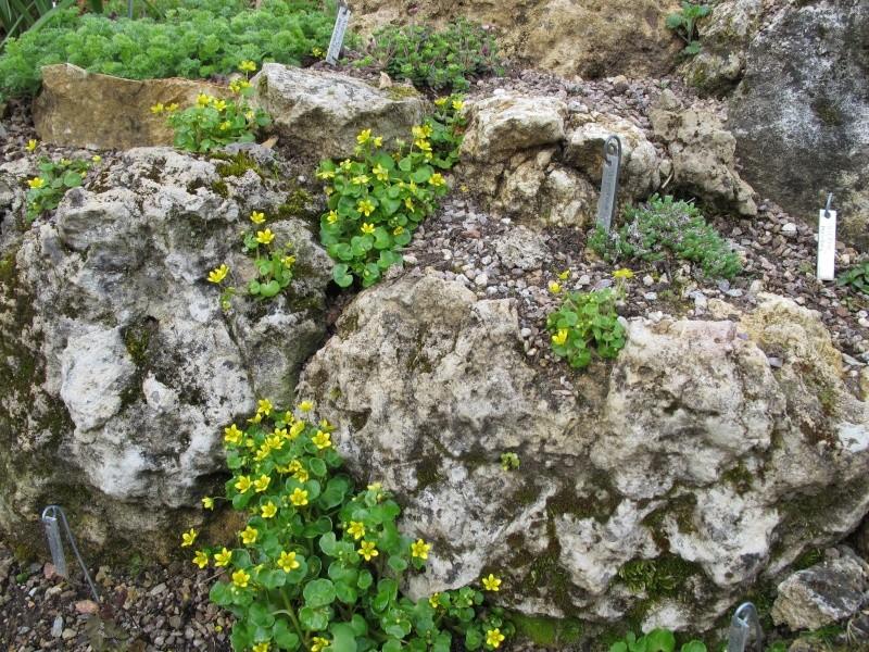 petit aperçu de mes rocailles - Page 2 Img_7411