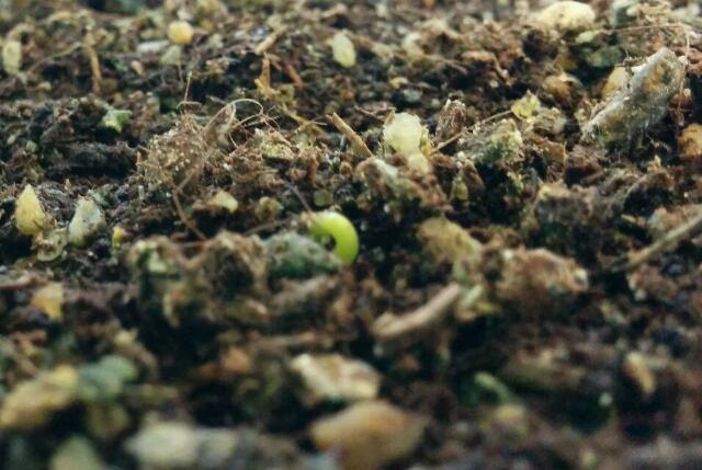 è nato un pino - È nato un pino!!! Rps20129