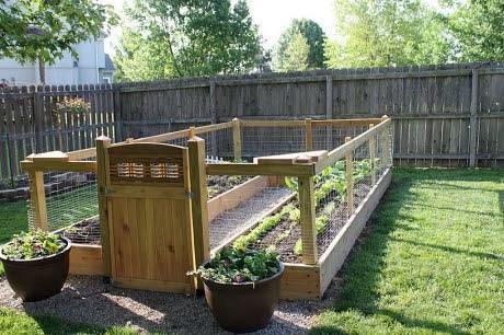Summer Project Garden10