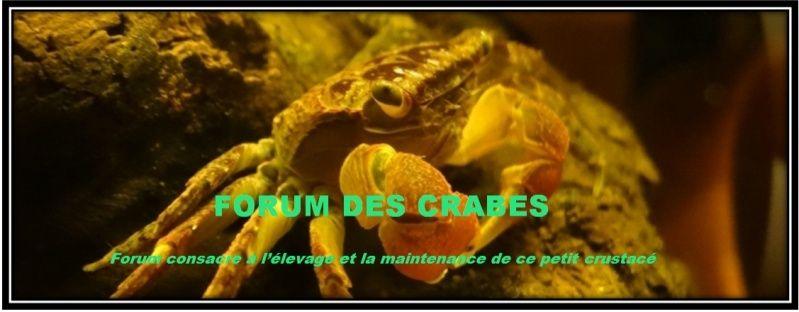 Forum O'Crabes