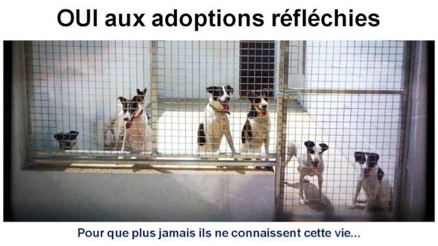 Stop à l'abandon, Oui aux adoptions réfléchies 11988610