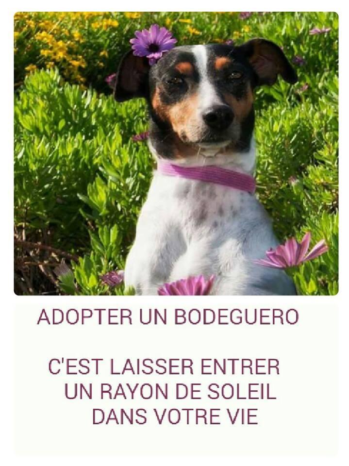 Comment vous convaincre d'adopter un Bodeguero ? 12047010