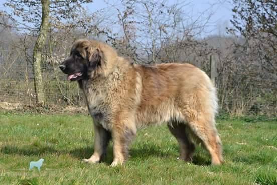 Le crapaud : Danger mortel pour les chiens 6186_910