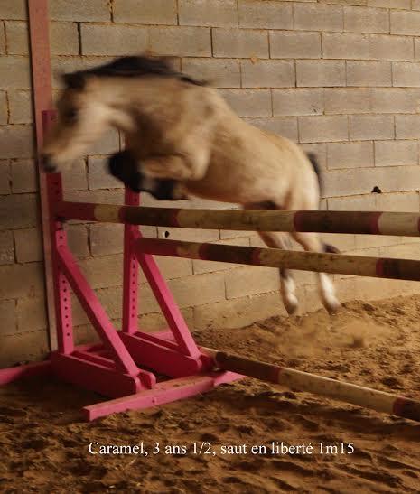 (Dpt 48) CARAMEL - ONC Poney - Sauvé par Hélèna !!!!!!!!!!!! (Janv 2014) - Page 6 6a263510