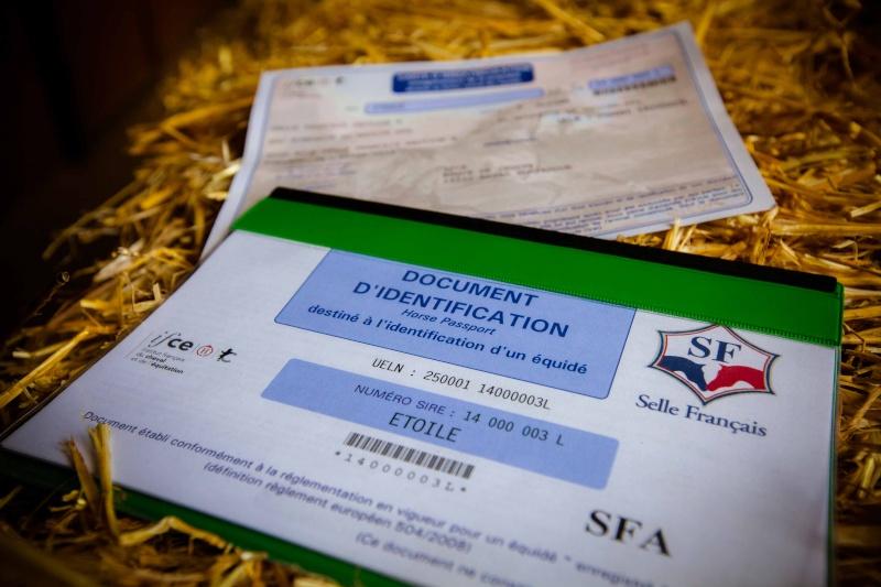 Acquisition d'un équidé -> Documents Sire-d10
