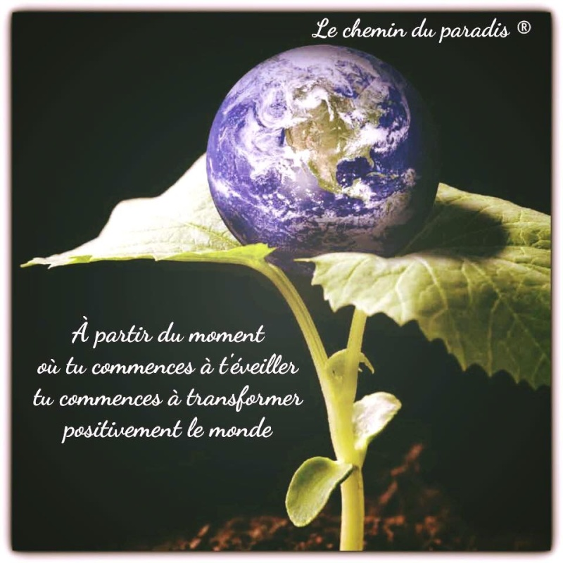 Citations que nous aimons - Page 7 Transf10