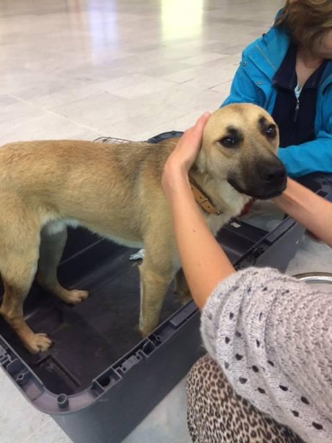 Arrivée  des chiens de Roumanie du vendredi 3 juin 2016 - Page 2 13325610
