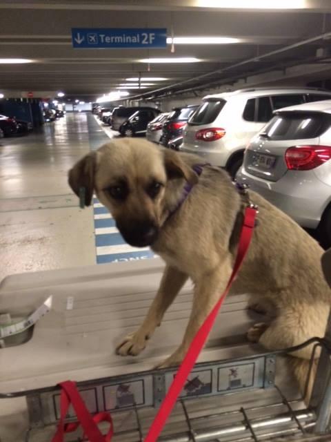 Arrivée  des chiens de Roumanie du vendredi 3 juin 2016 - Page 2 13335510