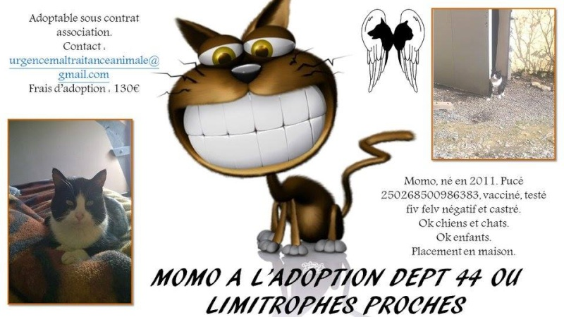 MOMO - mâle n et b - 03/2011 - UMA (44) Momo10