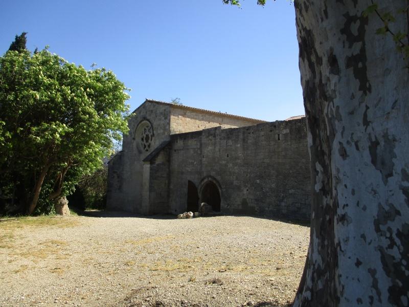 balades en Provence - Page 4 Img_2225