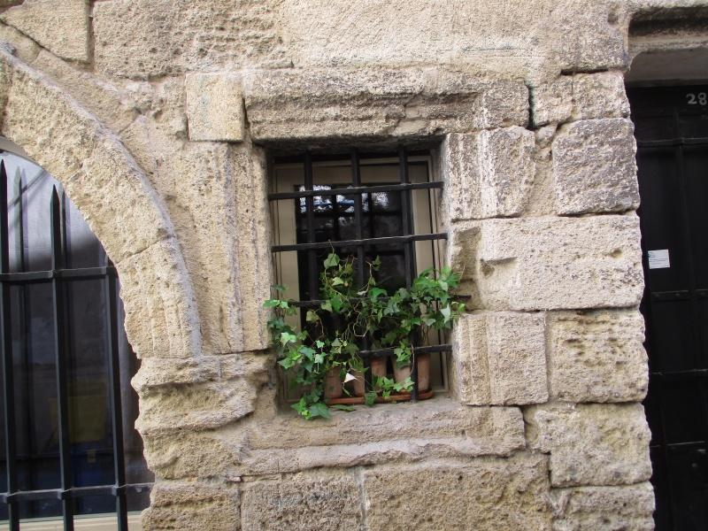 balades en Provence - Page 7 Img_2730