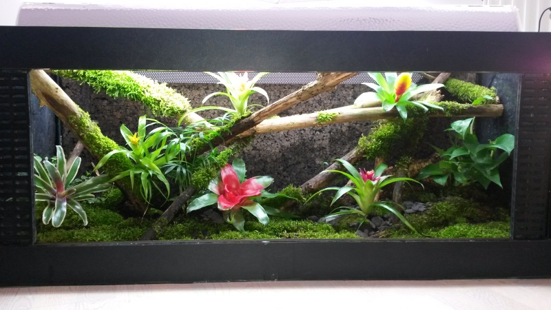 Terrarium pour Lygodactylus williamsi Versio10