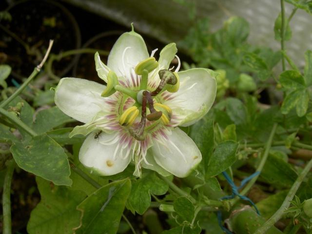 Floraisons du mois d'avril - Page 19 Pict7118