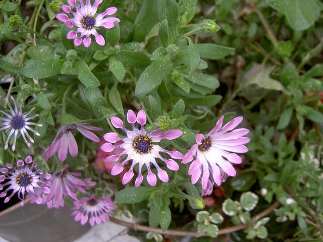 Floraisons du mois d'avril - Page 19 Pict7120