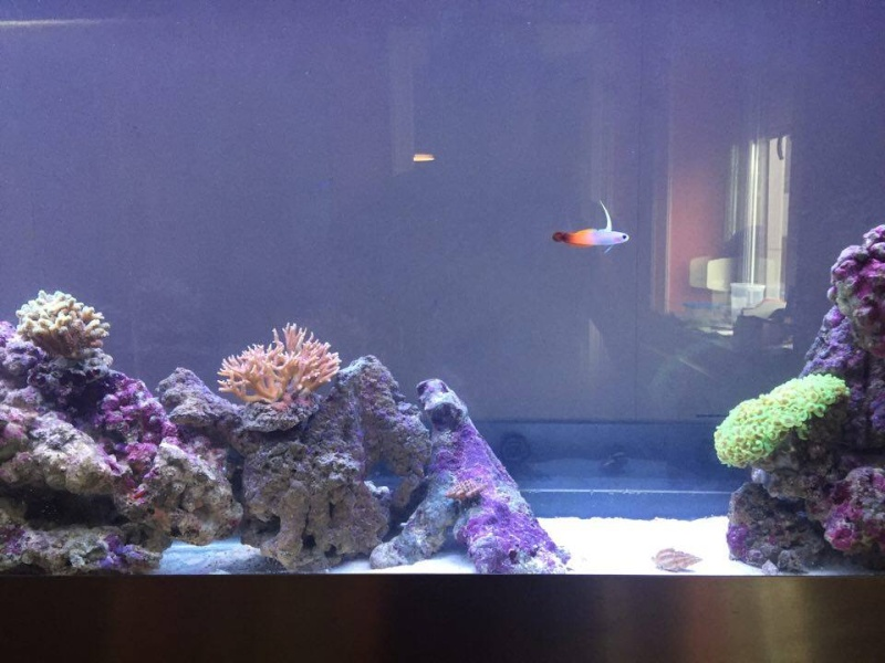 Bac de Mamsk - Reef plasma - Page 8 12884510