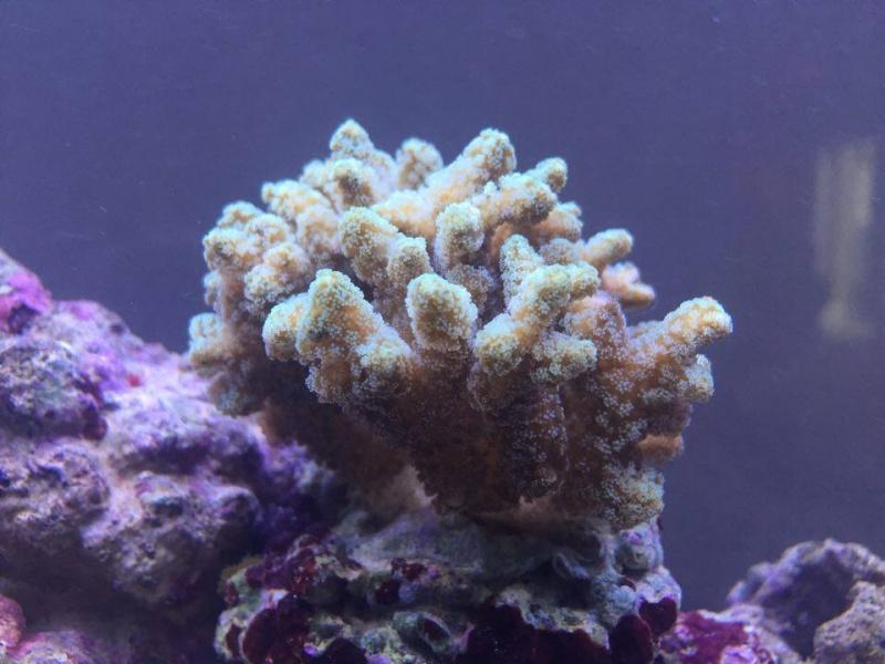 Bac de Mamsk - Reef plasma - Page 8 12921110