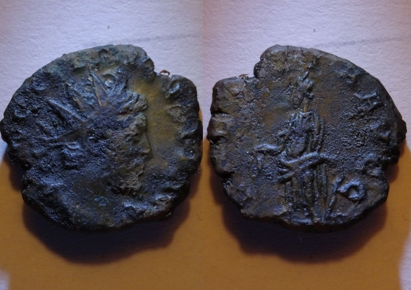 ID Tetricus - Laetitia ? Inconn11