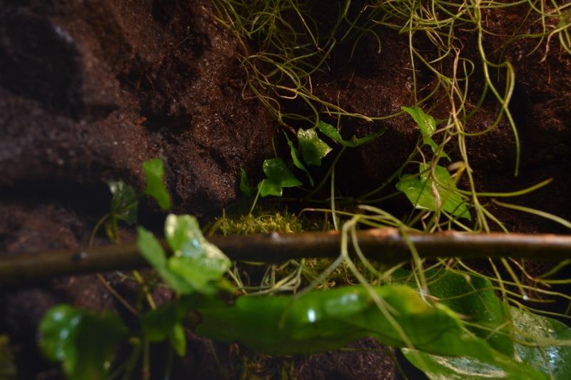 Paludarium amazonien  - Page 2 Dsc_3910