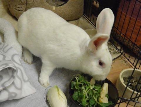 [ADOPTE] Binkie, jeune lapin de laboratoire à adopter Abinki10