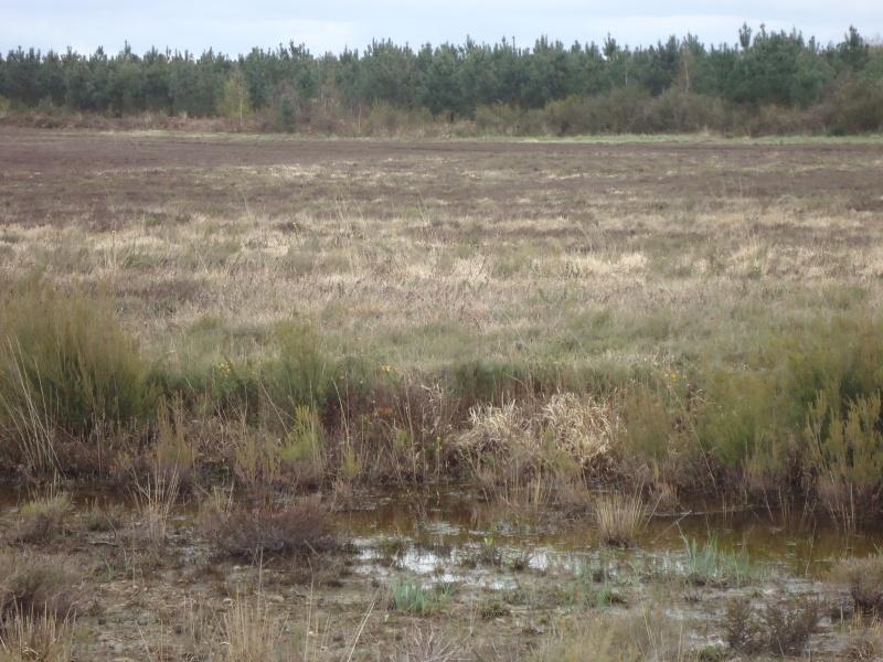 Bois , landes , tourbières et steppes de Chaumont d'Anjou (49) Dsc02615