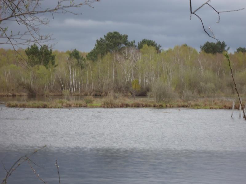 Bois , landes , tourbières et steppes de Chaumont d'Anjou (49) Dsc02616